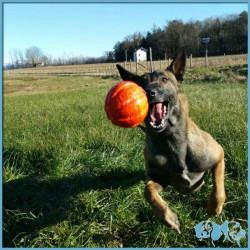 Liker pallina per cani XL