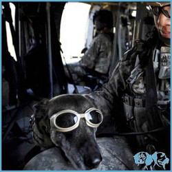 Doggles ILS Occhiali Protettivi