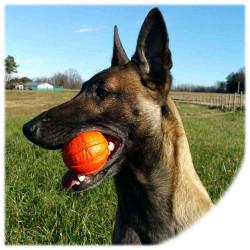 Liker pallina per cani