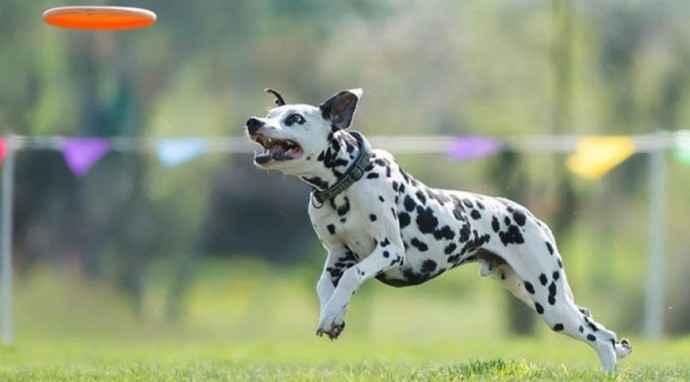 Skyhoundz 2015: Dog Specialist sarà presente con uno stand