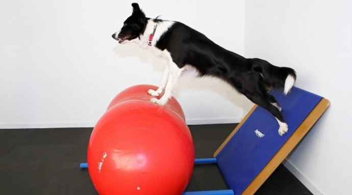 Scopri il Canine Cross Training