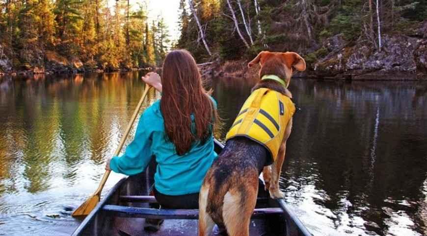 Salvagenti per cani: perchè usarli e quale scegliere