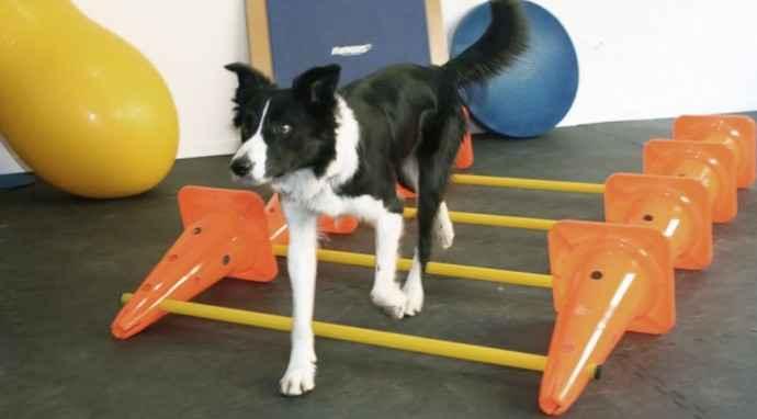 Il riscaldamento del cane prima delle attività sportive