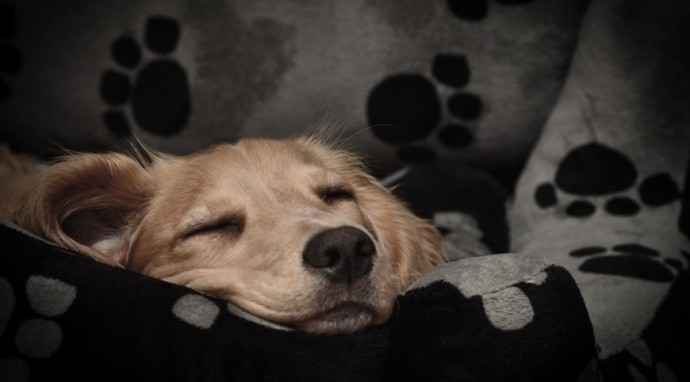 La cuccia del cane: fare le scelte giuste
