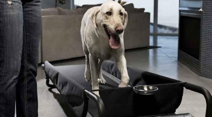 Dopo l'allenamento: il defaticamento del cane