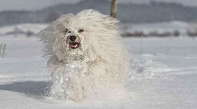 I polpastrelli del cane sono delicati: cosa fare se soffre il freddo