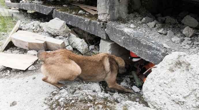 Operatività e sport: i cani da ricerca