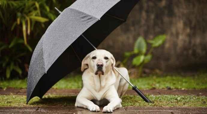 Proteggiamo il cane dalla pioggia
