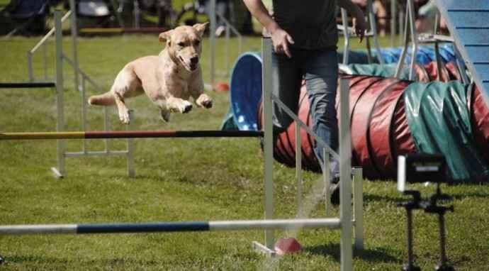 Gli integratori per cani: perchè usarli e in quali occasioni