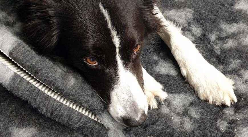 Vetbed®, Vello sintetico, Vetbedding, Pet & Vet bedding, che confusione! Ma ai cani piace?