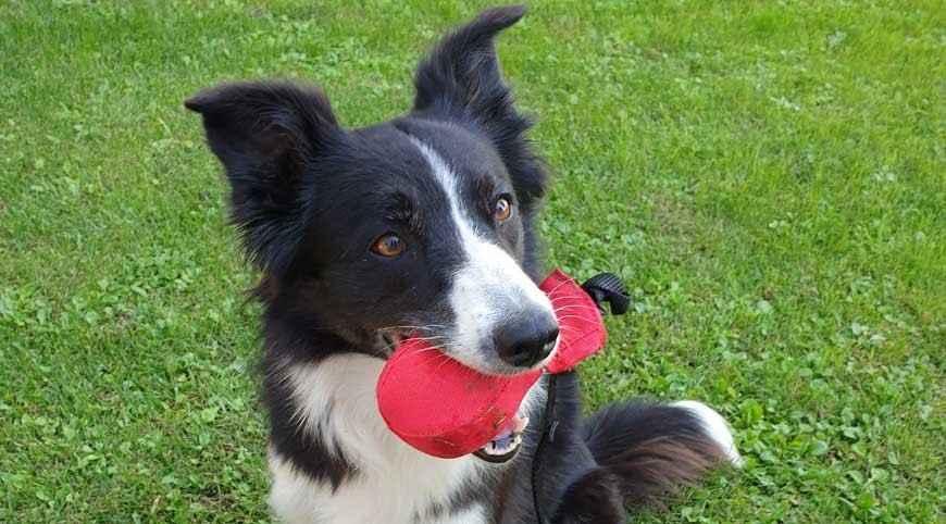 Dummy Ball: una pallina alternativa per giocare con il tuo cane